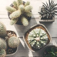 SUCCULENT AND CACTUS SHOW AT LA PROMENADE Competition With Prizes Totalling RM5,000 And Sales Booths For Lease